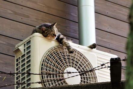 猫と室外機